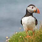 Perched Puffin by JustineEB
