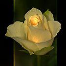 Glow by imagic