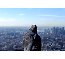 A Bird's Eye View - New York Photographic Print