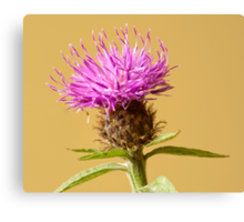 The Charm of the Cornflower Canvas Print