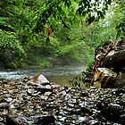 """ Rainy day - Nine Mile Creek, Camillus NY "" by DeucePhotog"