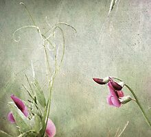 ~ Oh...Sweet Pea ~ by Lynda Heins