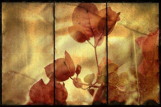 ~ Bougainvillea in Triptych ~ by Lynda Heins