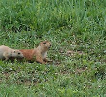 Prairie Dog Mother and Pup by Keanna