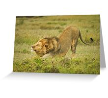 Simba facing dog Greeting Card