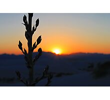 Plant in the sunset Photographic Print