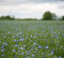 Flax by Christopher Cullen