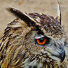 Long Eared Owl. by artfulvistas