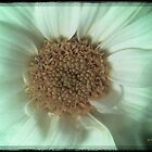 Daisy Daisy by David's Photoshop
