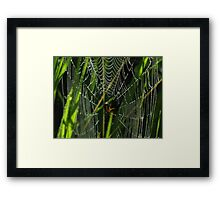 A Spider, Web, and Morning Dew Framed Print