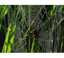 A Spider, Web, and Morning Dew Photographic Print