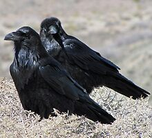 Painted Desert Raven Pair by DWMMPhotography