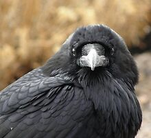 Petrified Raven Portrait by DWMMPhotography