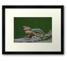 Holy Snapper! Framed Print