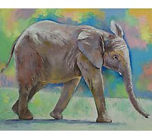 Baby Elephant Photographic Print