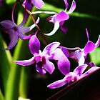 Orchids by Guy Jenkins