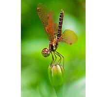 World's Fairy Photographic Print