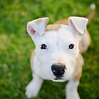 Rescued Bull Breeds by ruthlessphotos