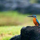 Blue Kingfisher by Sandeep  Ramje