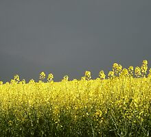 yellow verses grey - Young NSW by LeanneCooper