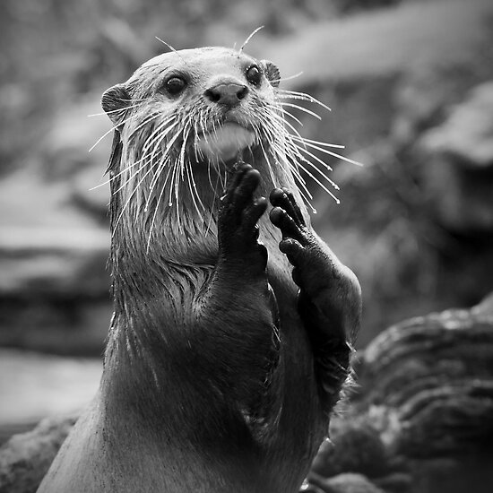 'If your happy and you know it clap your paws!' by Steve  Liptrot