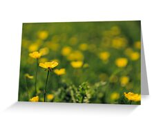 Buttercup meadow Greeting Card