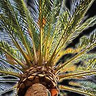 Date Palm - California by wandringeye