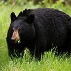 Bear Salad by EchoNorth