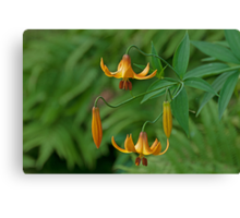 Canada Lily - Take 2! Canvas Print