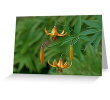 Canada Lily - Take 2! Greeting Card