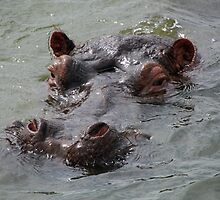 hippo head by gruntpig