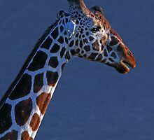 Giraffe in Blue by JenniferEllen
