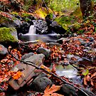 Calapooya River Fall Colors by Charles &amp; Patricia   Harkins ~ Picture Oregon