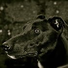 At The Ready- Greyhound. by Lou Wilson