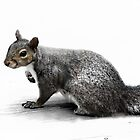 Summer Squirrel by Ticker