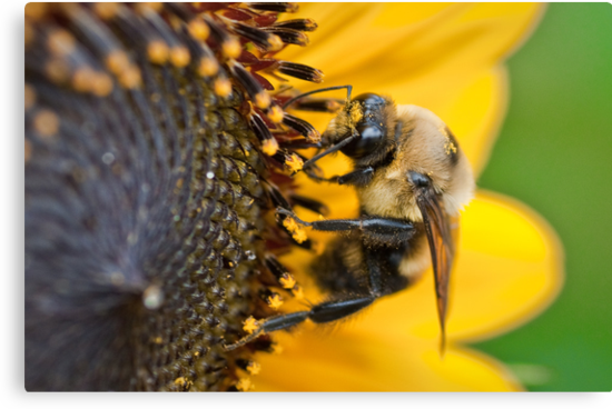 Busy Bumble by Briar Richard