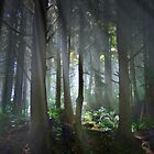Fog In The Forest by Charles & Patricia   Harkins ~ Picture Oregon