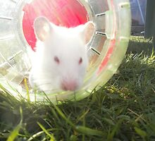 My Syrian Hamster Lionel by Rebecca White