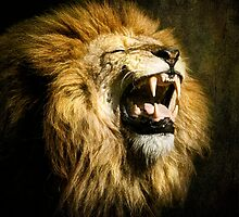The Lion's Roar by Tarrby