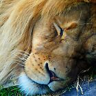 Sleepy Lion by tigerwings