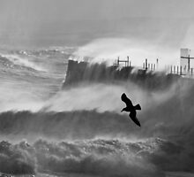 Storm Bird - Hartlepool Heugh Breakwater by Stuart100