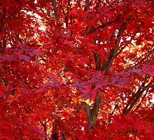 Fall Fire ^ by ctheworld