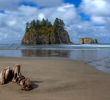 Cypress in the Sand (La Push, Washington) by Brendon Perkins