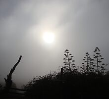 A cold and misty morning 1 by filiola