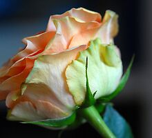 Hello Beauty :) by vbk70