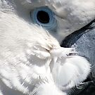 White Parrot by saseoche