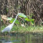 Great Egret by LydiaJayne