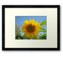 Summer Sunflower Garden art prints Blue Sky Baslee Framed Print