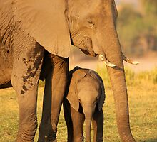 Baby Elephants by JenniferEllen