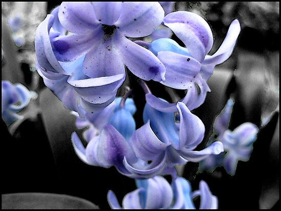 Purple Flowers by korinna999